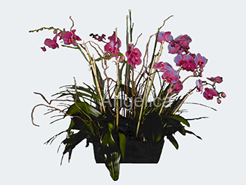 3 Orquídeas Color Lila o Blanca