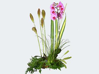 Orquídea en Color Lila