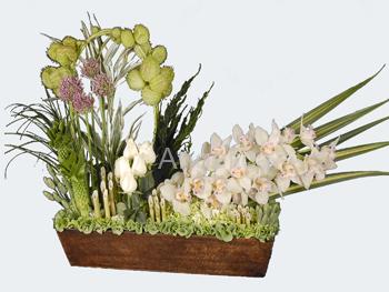 Arreglo de Orquídea Cimbidium