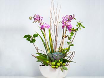 Orquídea Doble Vara