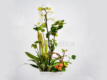 Orquídea Sencilla
