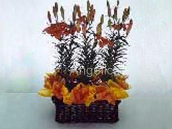 Plantas de Lilis