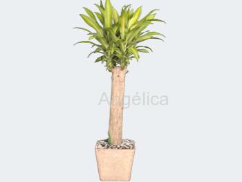 Árbol Palo Brasil