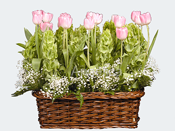 Arreglo Tulipanes